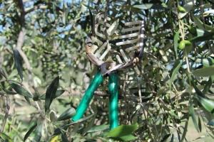 genuine olive oil